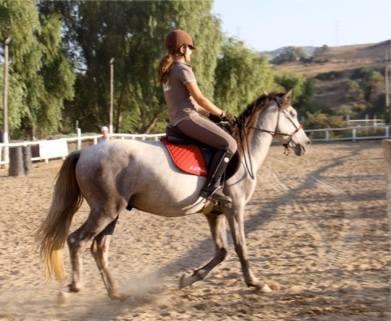 marbella horse livery spain