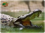 Crocodile Park Benalmadena