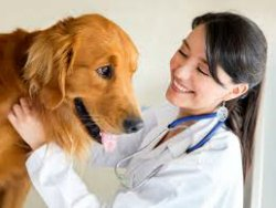 Pets & Petcare