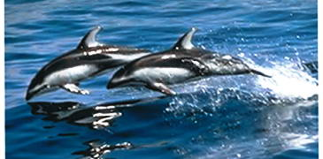 Gibraltar Dolphin Safari