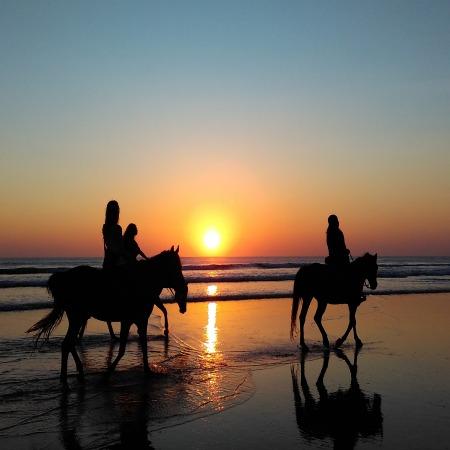 MARBELLA EQUESTRIAN - HORSES COSTA DEL SOL