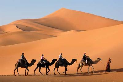 Camel Trekking by Night