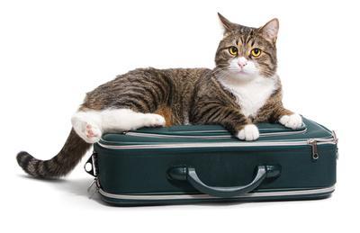 Cat sitter in Marbella