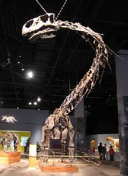 Dinopetrea Malaga Dinosaur Exhibition