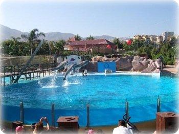 Dolphin experience at Selwo Marina