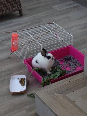 Found a bunny in Marbella