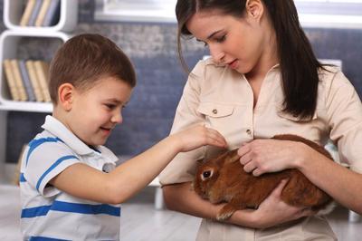 Rabbits make cosy pets