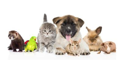 Pets are incredible family members