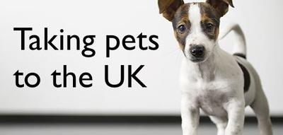 Taking pets from Spain to the UK