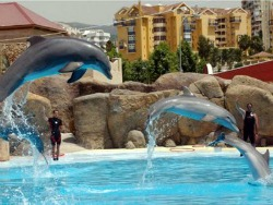 Dolphin Experience in Marbella