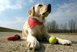 Posh Pets Spain