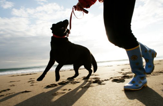 Dog walkers in Marbella