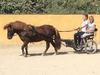Birthday parties with ponies in Marbella