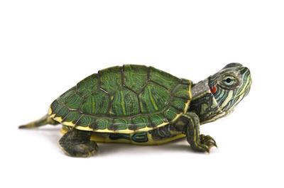 Turtles in Marbella
