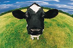 Organic Cow's Milk Marbella