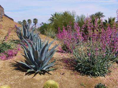 Arrayan Jardines Comprehensive Garden Design