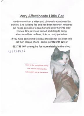 Abandoned cat needs home
