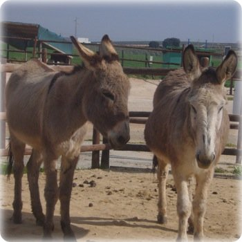 Donkey sanctuary antequera