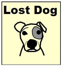Lost dog in Marbella