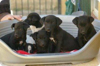 Marbella Pet Services