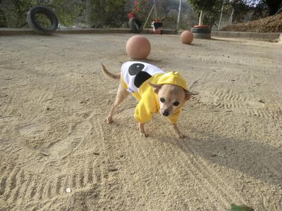 Lulu the Hoodie at Petcare Pet Hotel