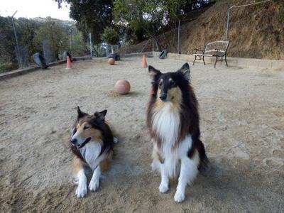 Petcare Pet Hotel Clients