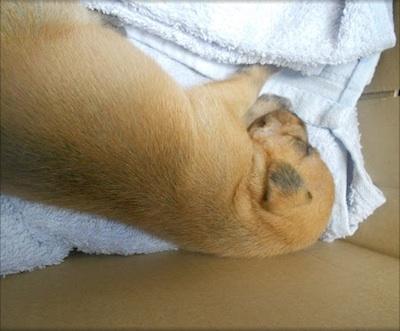 Puppy needs home