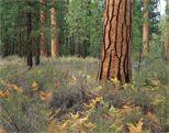 Wildside Survival Forest School for Kids